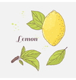 Set of hand drawn lemon and leaves Doodle fruit vector image vector image