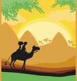 tourists riding camel vector image