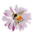 bumble-bee on a flower vector image