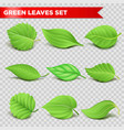 green leaf 3d relaistic icons eco environment or vector image vector image