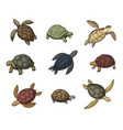 sea turtle animal tortoise and terrapin icons vector image vector image