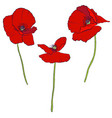 set drawing poppy flowers vector image vector image