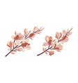 set magnolia branches in pastel color palette vector image vector image
