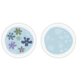 Bacteria virus and empty plate under microscope vector image