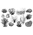 hand drawn collection corals reef plants vector image vector image