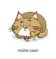 Maine coon Cat character isolated on white vector image vector image