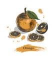 orange sketchvintage ink hand drawn of vector image