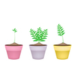 Ornamental Green Trees in Ceramic Flower Pots vector image vector image