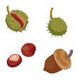 set ripe chestnuts and acorns isolated object vector image vector image