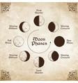 antique style moon phases circle vector image vector image