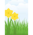daffodils vector image vector image