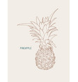 pine apple tropical fruit sketch vector image