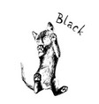black kitten cat hand drawn vector image