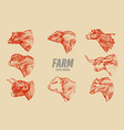 cows set in vintage style cattle heads longhorn vector image