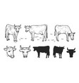 drawing cows and cattle vector image vector image