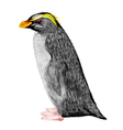 Fiordland crested penguin vector image vector image