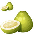 pomelo fruit cartoon icon isolated on vector image vector image