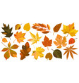 set isolated leaves vector image