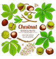 chestnut elements on white background vector image