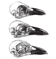 Crow Skull vector image vector image