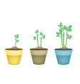 Fresh Celery Root in Ceramic Flower Pots vector image vector image