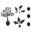 oak acorn silhouettes set vector image vector image