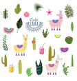 set lama alpaca cacti drinks and decorative vector image vector image
