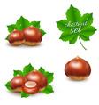 Chestnuts Set vector image vector image