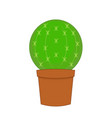 cactus isolated on white vector image