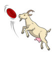 goat catches frisbee disc pop art vector image vector image