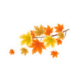 maple branch vector image