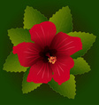 red flower of hibiscus vector image