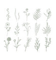set of detailed botanical drawings of flowers vector image vector image