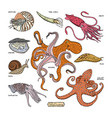 Shellfish marine animal octopus molluscs