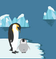 emperor penguins with chick on ice floe vector image
