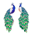 Set of two peacocks isolated on white background vector image vector image