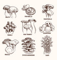sketch mushrooms autumn edible mushroom healthy vector image vector image