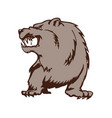 wild bear cartoon mascot animal cartoon character vector image vector image