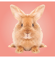 Abstract Low Poly Rabbit Design vector image vector image