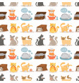cat cute animal funny seamless vector image vector image