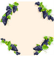 frame with black grapes vector image vector image