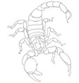 adult coloring bookpage a scorpion image vector image
