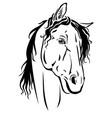 horse muzzle portrait vector image vector image