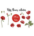 poppy flower red poppies isolated on white vector image