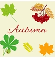 Autumn Leaves Set october colorful vector image