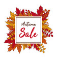 autumn sale banner fall leaves vector image