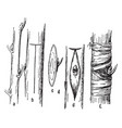 budding grafting vintage vector image vector image