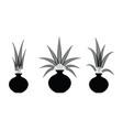 decorate fern flowers in vase vector image vector image