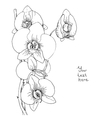 Flower of white orchid vector image vector image