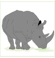 Huge male rhino vector image vector image